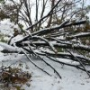 Photo Essay: Nor'easter Knocks Out Power, Rail Service, Cancels Flights