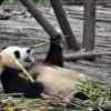 St. Regis Chengdu Opens in Sichuan Province