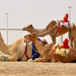 Coronavirus News Update – June 21: Only Vaccinated Fans Will Be Allowed at the 2022 World Cup, Says Host Country Qatar