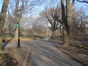 Walking path in Prospect Park